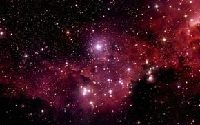 Картинка Stars, Nebula, Chili, La Silla Observatory, Wide Field Imager, IC 2177, The Seagull Nebula, Constellation …