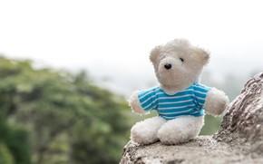 Картинка скалы, мишка, bear, teddy, одинокий, lonely