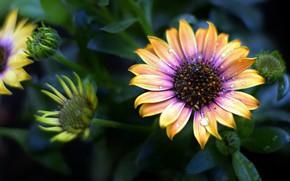 Картинка цветок, капли воды, боке