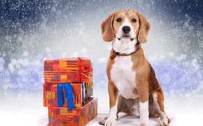 Картинка зима, подарки, Новый год, бигль