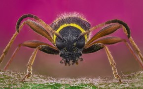 Картинка beetle, macro, insect