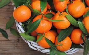 Картинка цитрусы, листики, мандарины