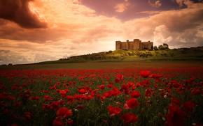 Картинка поле, лето, небо, облака, пейзаж, цветы, замок, маки, холм, красные, ярко, архитектура, маковое поле
