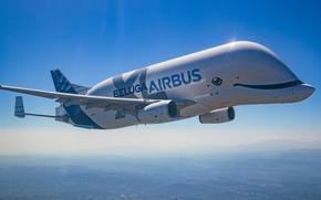 Картинка транспортный самолёт, Airbus Beluga XL, A330-200