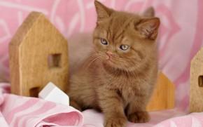 Картинка кошка, поза, котенок, рыжий, ткань, домик, мордашка, сидит, розовый фон, британский