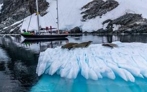 Картинка зима, море, животные, снег, природа, люди, яхта, льдина, тюлени, Александр Лозицкий