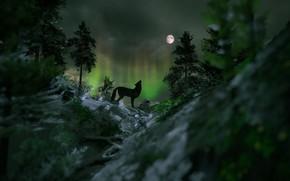 Картинка лес, ночь, камни, рендеринг, луна, волк, северное сияние, ели, силуэт, воет на луну