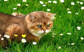 Обои кот, трава, серьезный