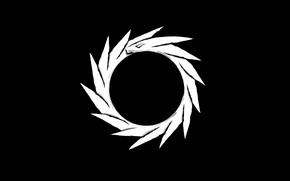 Картинка white, black, dragon, orbit
