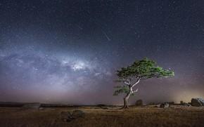 Картинка небо, фото, дерево