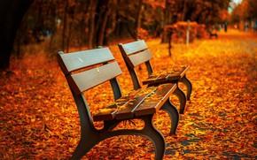 Картинка осень, листья, парк, скамейки, лавочки, лавки