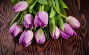 Картинка букет, фиолетовые, тюльпаны