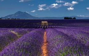 Картинка поле, лето, облака, пейзаж, цветы, горы, природа, синева, Франция, даль, горизонт, сарай, простор, домик, грядки, …