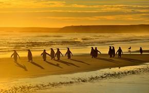 Картинка море, пляж, свет, птицы, берег, пингвины