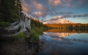 Картинка осень, лес, озеро, отражение, гора, пень, Washington State, Mount Adams, Takhlakh Lake, Штат Вашингтон, Гора …