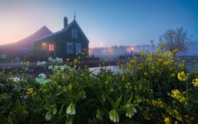 Картинка цветы, A Dutch Fairytale, канал, Zaanse Schans, небо