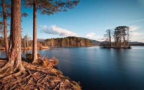 Картинка лес, лето, озеро