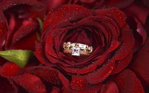 Картинка цветок, роза, кольцо, обручальное, Morganval
