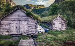 Картинка Norway, Møre og Romsdal, Bjørke