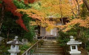 Картинка Природа, Осень, Япония, Лестница, Храм, Gohodo