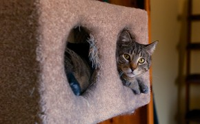 Картинка кошка, кот, взгляд, морда, уют, серый, фон, комната, коробка, дыра, ворс, нора, лестница, дырки, лежит, …