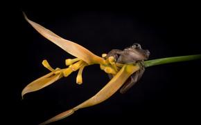 Картинка цветок, лягушка, черный фон