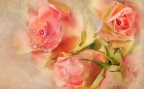 Картинка розы, букет, розовые, фотоарт
