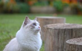 Картинка кошка, кот, фон, пеньки, Fleur Walton