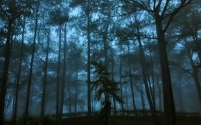 Картинка лес, деревья, природа, туман, сумерки