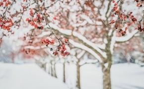 Картинка зима, яблоки, сад