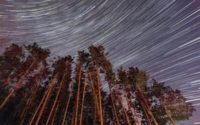 Картинка небо, звезды, деревья