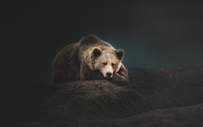 Картинка морда, темный фон, отдых, сон, обработка, медведь, мишка, спит, лежит, бурый, холмик