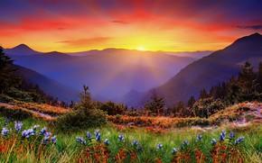 Картинка трава, закат, горы, рассвет