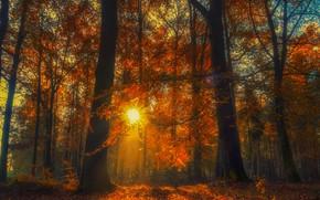 Картинка осень, лес, деревья, солце, опавшая листва