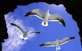 Картинка камни, птицы, солнце, небо, скалы, облака, чайки