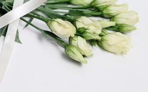 Картинка цветы, букет, лента, белые, бутоны, эустома