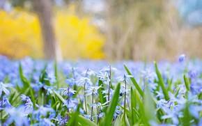 Картинка Весна, Цветок, Растение, Растения, Flower, Flowers, Color, Flora, Plants, Close-up, Blooming, Bloom, Флора, Plant, by …
