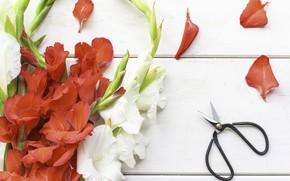 Картинка цветы, букет, ножницы, гладиолусы