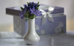 Картинка цветы, коробка, ваза