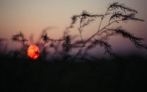 Картинка Закат, Солнце, Природа, Вечер, Восход, Растение, Утро, Рассвет, Растения, Nature, Horizon, Sun, Sunset, Sunrise, Dawn, …