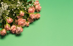 Картинка цветы, зеленый, фон, розы, белые, Tania Shustyk