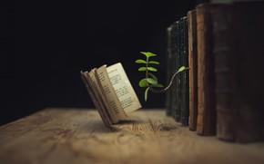 Картинка макро, фон, книги