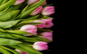 Картинка цветы, букет, тюльпаны, розовые, pink, flowers, tulips