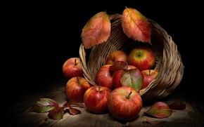 Картинка листья, яблоки, еда, фрукты, черный фон, натюрморт, корзинка, предметы, композиция