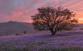 Картинка поле, небо, облака, закат, цветы, ветки, природа, дерево, рассвет, поляна, красота, весна, холм, луг, розовое, …