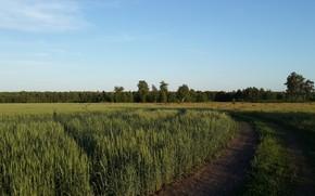 Картинка поле, лето, природа, день