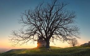 Картинка дерево, рассвет, Франция, утро, France, Сен-Лоран-д'Аньи