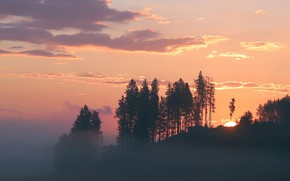 Картинка лес, закат, туман