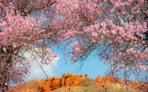 Картинка свет, цветы, горы, ветки, природа, вишня, красота, весна, сакура, розовые, цветение