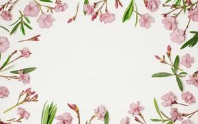 Картинка цветы, фон, рамка, розовые, pink, flowers, frame, floral